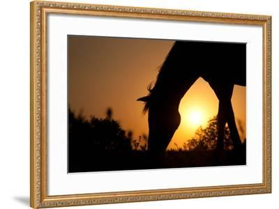 Grazing Horse Silhouette Against Rising Sun In Rich Tone-Sari ONeal-Framed Photographic Print