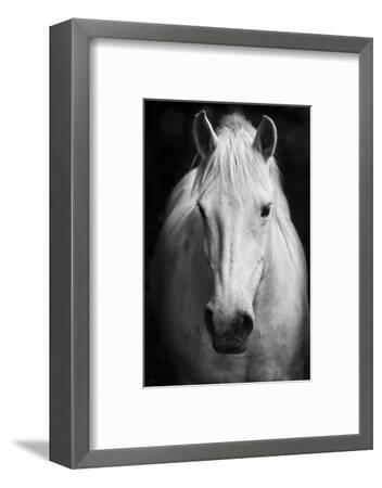 White Horse'S Black And White Art Portrait-kasto-Framed Photographic Print