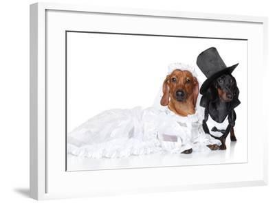 Fashionable Dachshund Dog Wedding-Jagodka-Framed Photographic Print