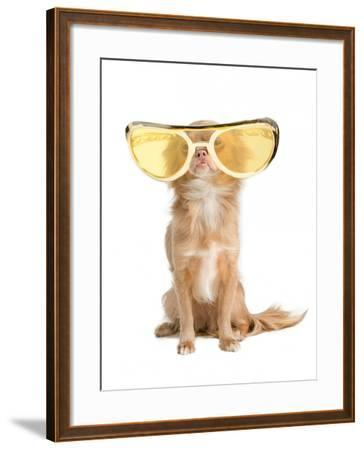 Tiny Chihuahua Dog With Funny Huge Glasses-vitalytitov-Framed Photographic Print