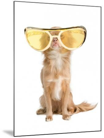 Tiny Chihuahua Dog With Funny Huge Glasses-vitalytitov-Mounted Photographic Print