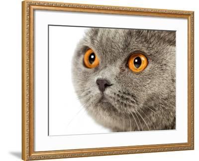 British Shorthair Cat-AberratioN-Framed Photographic Print