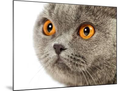 British Shorthair Cat-AberratioN-Mounted Photographic Print