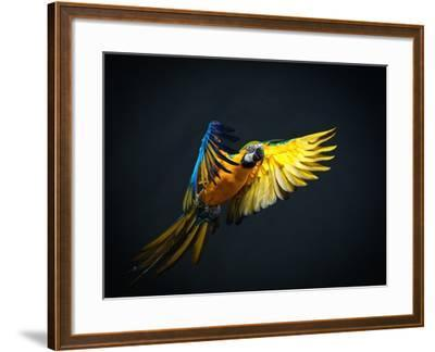 Colourful Flying Ara On A Dark Background-NejroN Photo-Framed Photographic Print