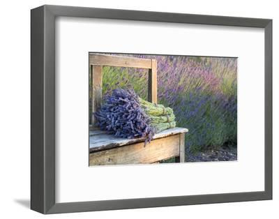 Bouquets on Lavenders on a Wooden Old Bench-Anna-Mari West-Framed Photographic Print