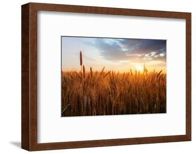 Wheat Field over Sunset-TTstudio-Framed Photographic Print