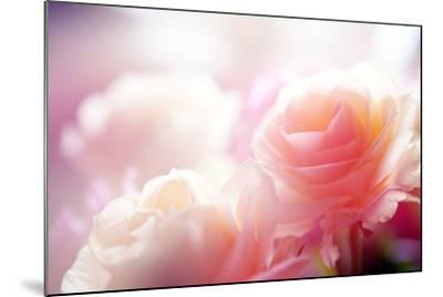 Beautiful Flowers Made with Color Filters-Timofeeva Maria-Mounted Photographic Print