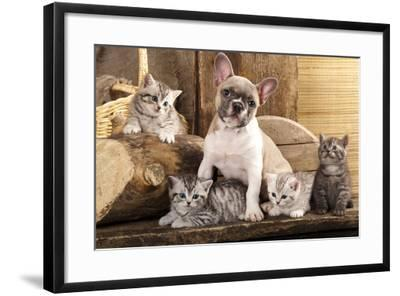 Cat And Dog, British Kittens And French Bulldog Puppy In Retro Background-Lilun-Framed Photographic Print