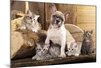 Cat And Dog, British Kittens And French Bulldog Puppy In Retro Background-Lilun-Mounted Photographic Print