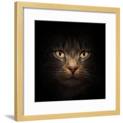 Cat Face With Beautiful Eyes Close Up Portrait-Michal Bednarek-Framed Photographic Print
