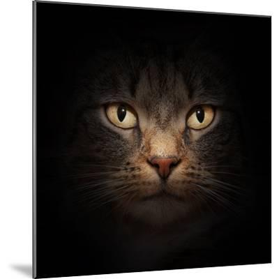Cat Face With Beautiful Eyes Close Up Portrait-Michal Bednarek-Mounted Photographic Print
