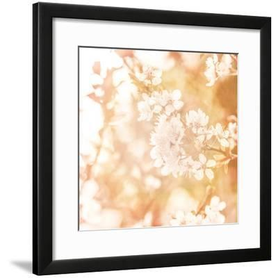 Picture of Beautiful Apple Tree Blossom-Anna Omelchenko-Framed Photographic Print