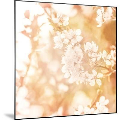 Picture of Beautiful Apple Tree Blossom-Anna Omelchenko-Mounted Photographic Print