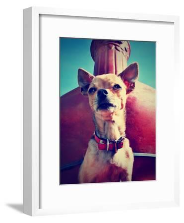 A Chihuahua Sitting in Front of a Fireplace-graphicphoto-Framed Photographic Print