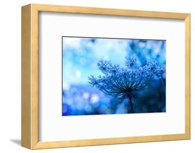 Wildflower Background-Malija-Framed Photographic Print