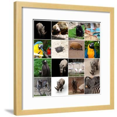 Various Wild Animals Composition-Aaron Amat-Framed Photographic Print
