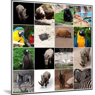 Various Wild Animals Composition-Aaron Amat-Mounted Photographic Print
