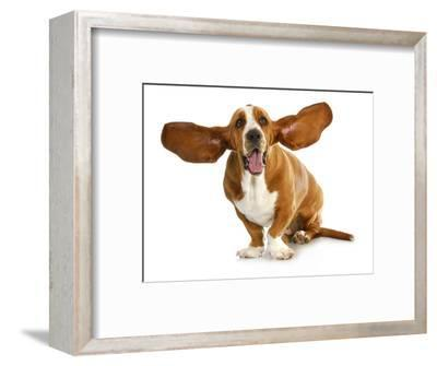 Happy Dog - Basset Hound With Ears Up-Willee Cole-Framed Photographic Print