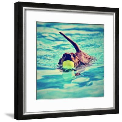 A Dachshund with a Ball in His Mouth-graphicphoto-Framed Photographic Print