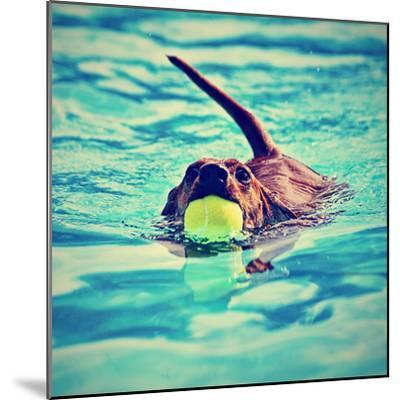 A Dachshund with a Ball in His Mouth-graphicphoto-Mounted Photographic Print