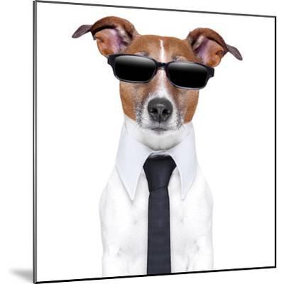 Cool Doggy-Javier Brosch-Mounted Photographic Print