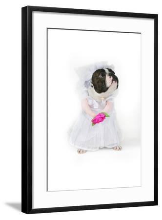 Dog Bride-graphicphoto-Framed Photographic Print