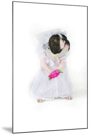Dog Bride-graphicphoto-Mounted Photographic Print