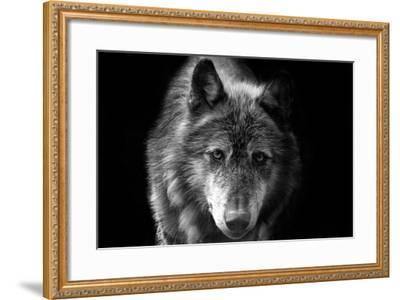 Wolf-Brian Dunne-Framed Photographic Print