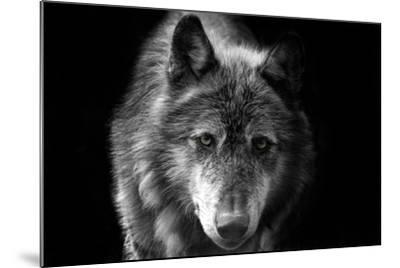 Wolf-Brian Dunne-Mounted Photographic Print