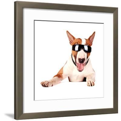 Cheerful Bull Terrier in Sunglasses-AZALIA-Framed Photographic Print