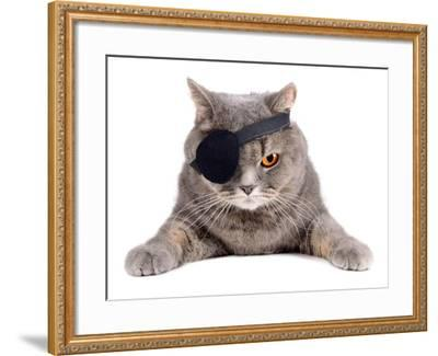 Pirate Cat- eAlisa-Framed Photographic Print
