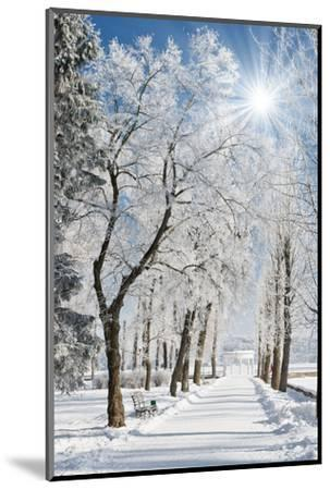 Beautiful Winter Landscape with Snow Covered Trees-Leonid Tit-Mounted Photographic Print