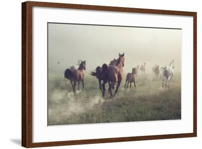Horses in Dust-conrado-Framed Photographic Print