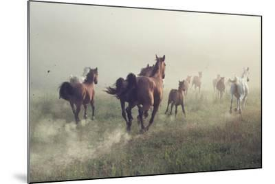 Horses in Dust-conrado-Mounted Photographic Print