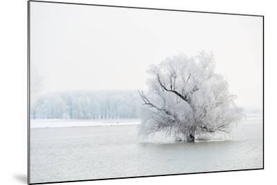 Winter Landscape-geanina bechea-Mounted Photographic Print