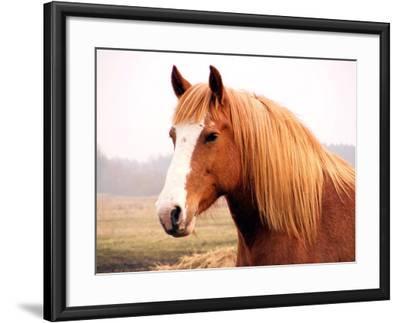 Palomino Horse Portrait-Anastasija Popova-Framed Photographic Print
