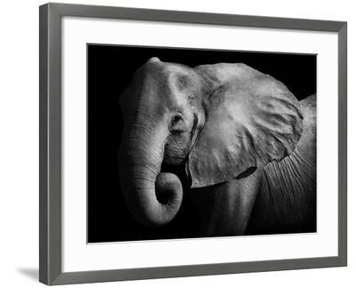 Elephant-Donvanstaden-Framed Photographic Print