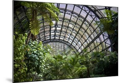 Inside the Botanical Building in Balboa Park in San Diego, California.  inside are over 350 Species-pdb1-Mounted Photographic Print