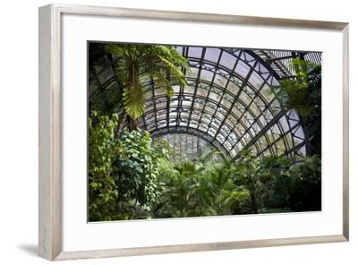 Inside the Botanical Building in Balboa Park in San Diego, California.  inside are over 350 Species-pdb1-Framed Photographic Print
