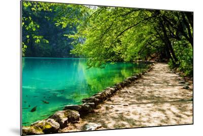 Path near A Forest Lake with Fish in Plitvice Lakes National Park, Croatia-Lamarinx-Mounted Photographic Print