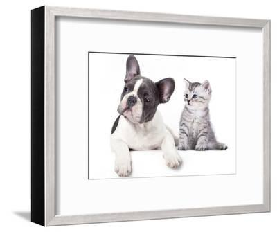 Cat and Dog, British Kitten and  French Bulldog Puppy-Lilun-Framed Photographic Print