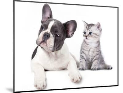 Cat and Dog, British Kitten and  French Bulldog Puppy-Lilun-Mounted Photographic Print