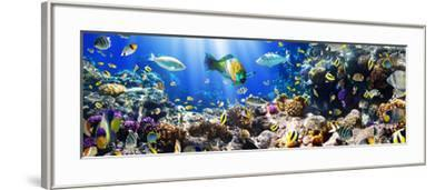 Photo of a Tropical Fish on a Coral Reef-Irochka-Framed Photographic Print
