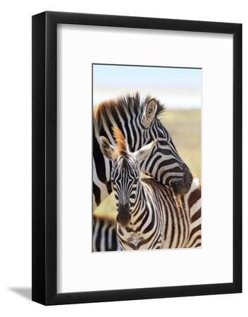 Baby Zebra with Mother-MattiaATH-Framed Photographic Print