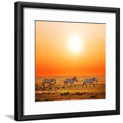 Zebras Herd on Savanna at Sunset, Africa. Safari in Serengeti, Tanzania-Michal Bednarek-Framed Photographic Print