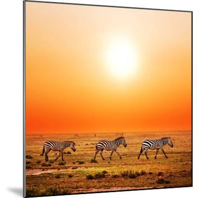 Zebras Herd on Savanna at Sunset, Africa. Safari in Serengeti, Tanzania-Michal Bednarek-Mounted Photographic Print