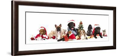 Dog and  Cat and Kitens  Wearing a Santa Hat-Lilun-Framed Photographic Print