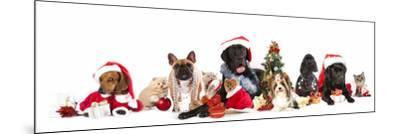 Dog and  Cat and Kitens  Wearing a Santa Hat-Lilun-Mounted Photographic Print