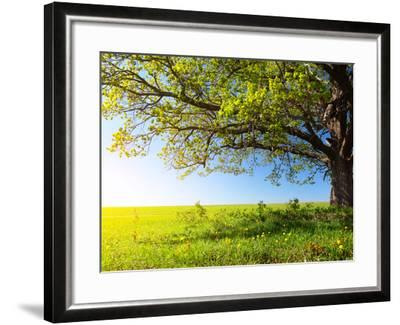 Spring Tree with Fresh Green Leaves on a Blooming Meadow-Dudarev Mikhail-Framed Photographic Print
