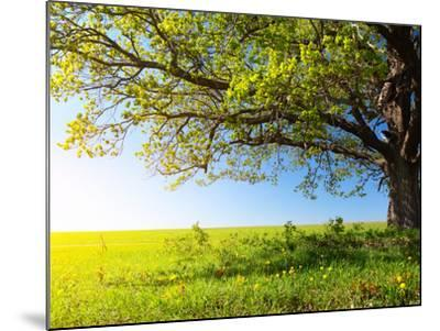 Spring Tree with Fresh Green Leaves on a Blooming Meadow-Dudarev Mikhail-Mounted Photographic Print